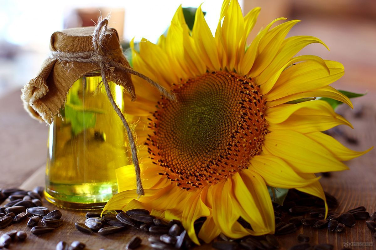 Sunflower and soybean seeds
