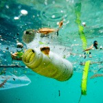 6 consequences of water pollution