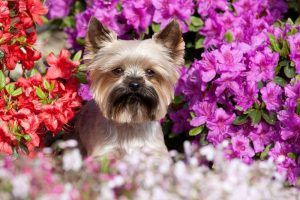 what plants are toxic to pets