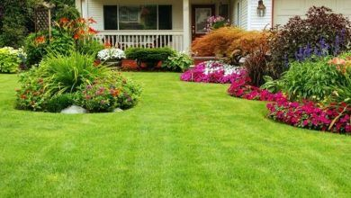 choose plants for your yard
